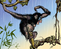 Chimpanzee. In the rain. Additional file format Illustrator 8 eps Stock Photo