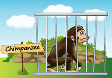 Chimpanzee in cage Stock Images