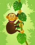 Chimpanzee cartoon Stock Images
