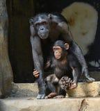 CHIMPANZEE AND CHILD Stock Photo