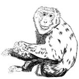 Chimpanzee drawing vector. Animal artistic, use for your design. Royalty Free Stock Photo