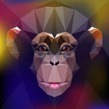 Chimpanzee. face of a monkey Stock Photography