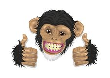 Chimpanzee. A happy chimpanzee for a logo of all products Stock Image