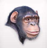 Chimpanzee head illustration Stock Photography