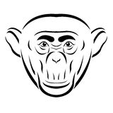 Chimpanzee head Royalty Free Stock Photos