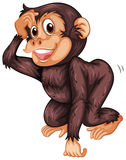 Chimpanzee. Illustration of a closeup chimpanzee Royalty Free Stock Image