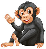 A chimpanzee Royalty Free Stock Photography