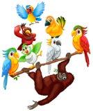 Chimpanzee and many birds on the branch. Illustration Stock Illustration