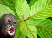 A Chimpanzee Monkey on Green Leaves Background Stock Photo