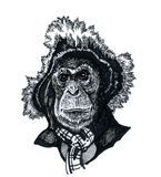 A monkey in a hat. A chimpanzee monkey in a hat, a portrait of an animal in a man`s clothing Royalty Free Stock Photos
