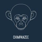 Chimpanzee monkey portrait drawn in one continuous line  Stock Photos