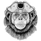 Chimpanzee Monkey wearing pirate hat Cocked hat, tricorn Sailor, seaman, mariner, or seafarer. Wild animal wearing pirate cocket hat Stock Photo