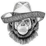 Chimpanzee Monkey Wild animal wearing sombrero Mexico Fiesta Mexican party illustration Wild west Royalty Free Stock Photos