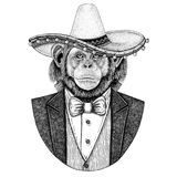 Chimpanzee Monkey Wild animal wearing Sombrero - traditional mexican hat Hand drawn illustration for tattoo, emblem. Logo, badge, patch, t-shirts Stock Photos