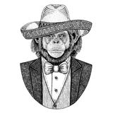 Chimpanzee Monkey Wild animal wearing Sombrero - traditional mexican hat Hand drawn illustration for tattoo, emblem. Logo, badge, patch, t-shirts Royalty Free Stock Image