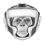 Chimpanzee Monkey Wild boxer Boxing animal Sport fitness illutration Wild animal wearing boxer helmet Boxing protection. Wild boxer Boxing animal Sport fitness Royalty Free Stock Photos