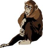 Chimpanzee. Sitting and making noise Royalty Free Stock Photo