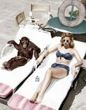 Chimpanzee and a woman sunbathing Royalty Free Stock Image
