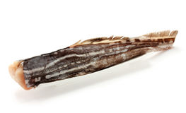 Chimère de poissons (lapin de mer, rat de mer) d'isolement Images libres de droits