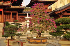 Chin Li nunnery and bonsai gardens, Hong Kong Stock Image