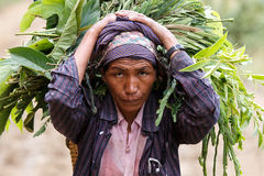 Chin State, Myanmar Stock Image