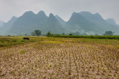 China agricultural fields cloudy Stock Image