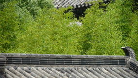 China ancient architecture in bamboo forest.
