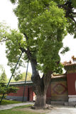 China Asia, Beijing, Beihai Park, ancient architecture, ancient trees Royalty Free Stock Photos