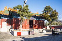 China and Asia, Beijing,the history of the building, Bei Ding Niangniang Temple,palace hall,ancient cypress Royalty Free Stock Images