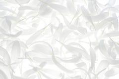China-Asterblumenblätter Stockbild