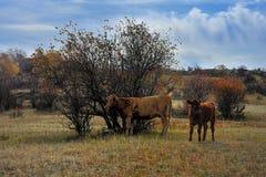 China Bashang grassland scenery Royalty Free Stock Image