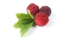 China bayberry Royalty Free Stock Photography