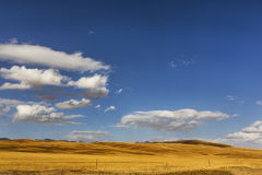 China Bayinbuluke grassland in Xinjiang royalty free stock image