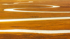 China Bayinbuluke grassland in Xinjiang. Bayanbulak grasslands, located in Xinjiang Bayingolin Mongol Autonomous State and static County in the northwest, the stock images