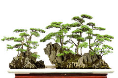 China bonsai Royalty Free Stock Images