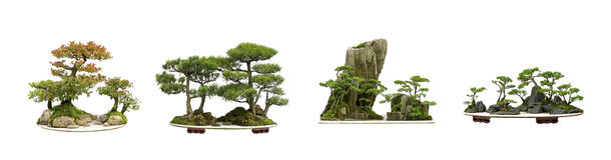 China bonsai stock images
