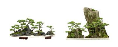 China bonsai royalty free stock photography