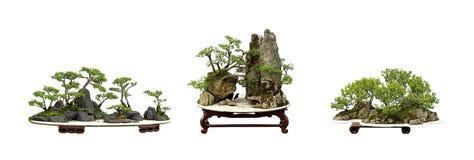China bonsai Stock Image