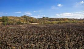 China de Jilin de la selva de los lagos Fotografía de archivo libre de regalías