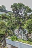 China, de verbazende schoonheid van de kunst van Bonsai Royalty-vrije Stock Fotografie
