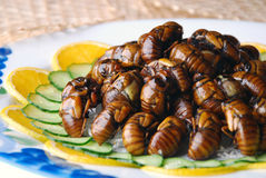 China delicious food--fried cicada stock image