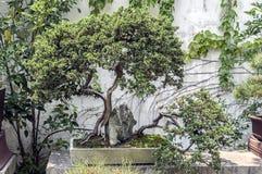 China, die erstaunliche Schönheit der Kunst der Bonsais Lizenzfreies Stockbild