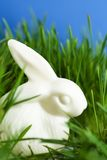 China easter bunny is in the green grass Stock Image