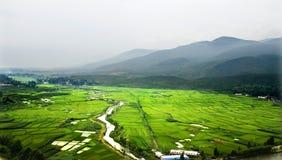 China-Feldpflanzen Lizenzfreie Stockfotografie