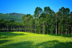 China Field  and nature Landscape  Royalty Free Stock Photography