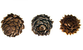China Fir Tree Cone Stock Photos