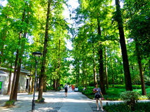 China firs by West Lake Cultural Landscape of Hangzhou. Tourists walking in the firs forest by West Lake Cultural Landscape in Hangzhou city Zhejiang province Stock Photography