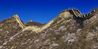 China great wall Stock Image