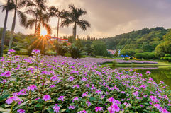 China GuangZhou  flower Garden Royalty Free Stock Image