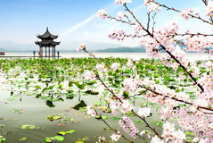 China Hangzhou West Lake Landscape. Chinese ancient pavilion on the west lake in hangzhou stock images